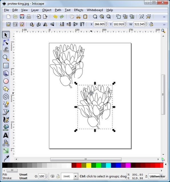 King Protea Drawing King Protea Drawing While a
