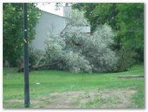 Storm Damage - Eagan
